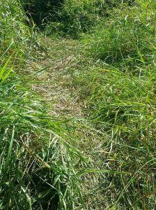 635711816237627456-kuhn-grass