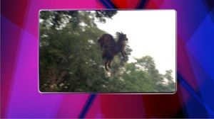 apparent news woman claims she has pictures of the Jersey Devil?